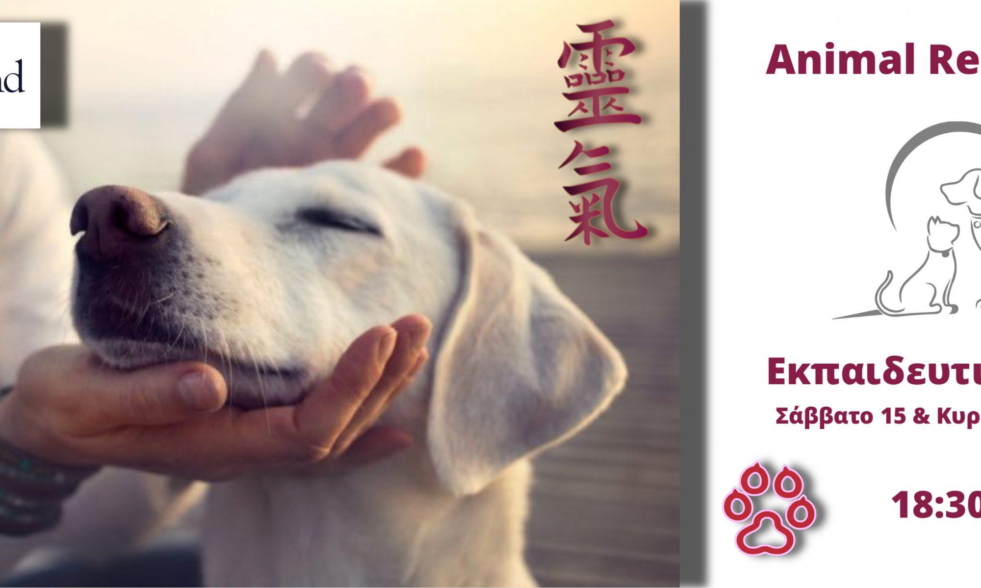 Εκπαίδευση Animal Reiki Level 1
